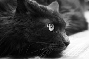 Photo animaux de compagnie 07